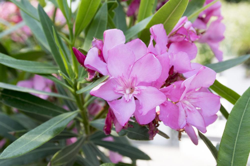 Jakie Rośliny Do Ogrodu Zimowego Wybrać Blog Edomatorpl
