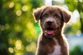 Pies W Ogrodzie Jak Zadbać O Bezpieczeństwo Pupila Blog